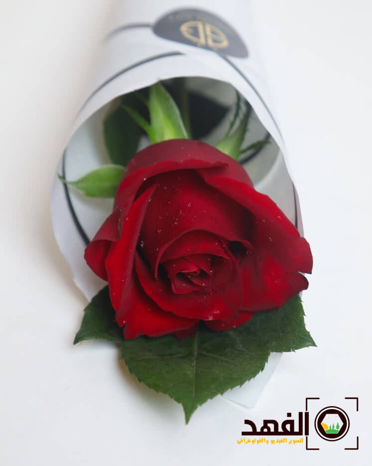 وردة حمراء